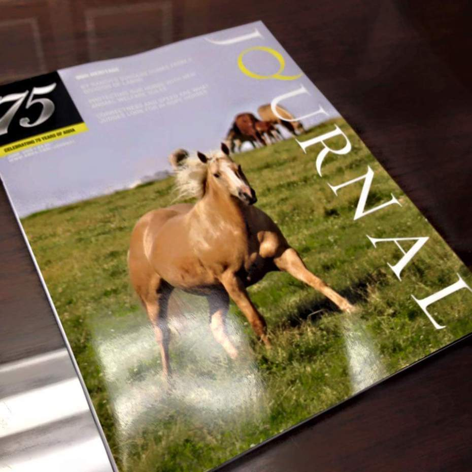 Watch your mail for your June issue of the American Quarter Horse Journal. Our very own KT Major Sunshine is on the cover! And it only gets better. Turn to page 76 of the Journal and read the KT Ranch Feature story.