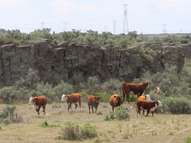 CowsApr2014