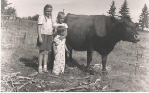 Pierson kids (Don is the little one) with one of their cows.