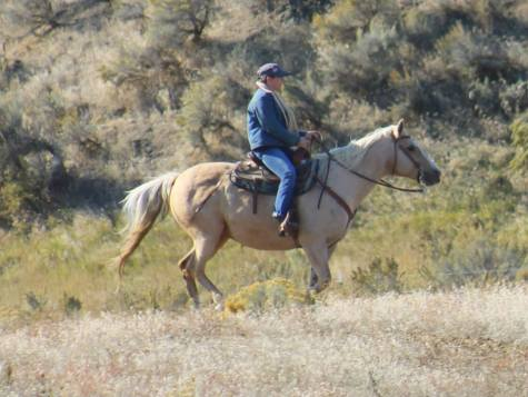 KT Ranch and Longhorn Cattle Company have agreed to add a $500.00 purse to be split between the top contenders with horses from either KT Ranch or Longhorn at this show. The highest point earner from one of our ranches takes 60% of the purse, with the entire purse being paid out. Only horses from KT and Longhorn are eligible for this purse. I really think there are some KT horses out there that could win this. Help me spread the work on this 3 part series show in Ellensburg and get some KT horses to the show.