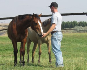 Cody with yearlings