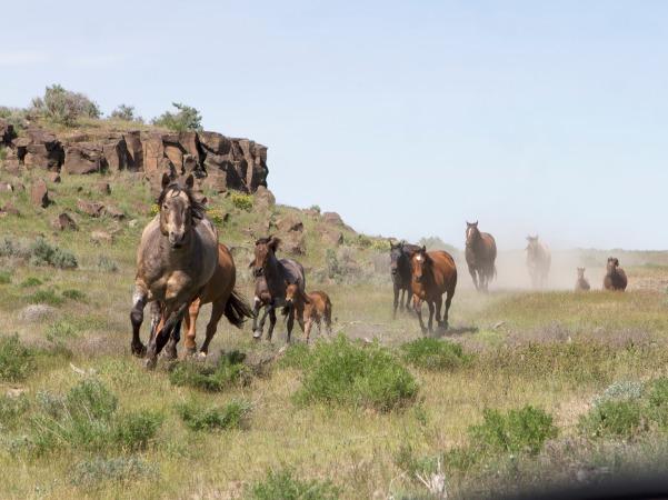 KT Gunpowder N Lead with mares