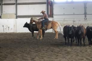 Jackpot cattle