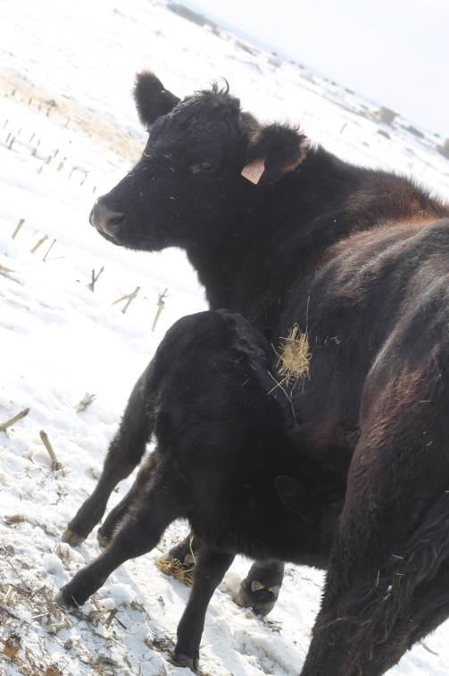 302M and calf Feb 2019