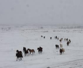 Horses in snow Feb 2019