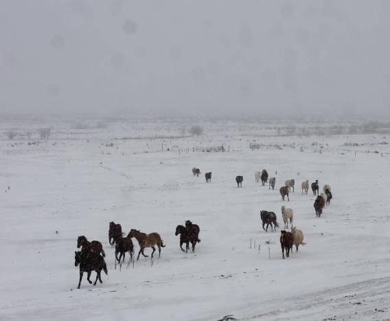 Horses in snow Feb 2019