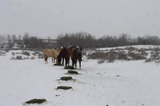 Horses Snow Feb 2019-1