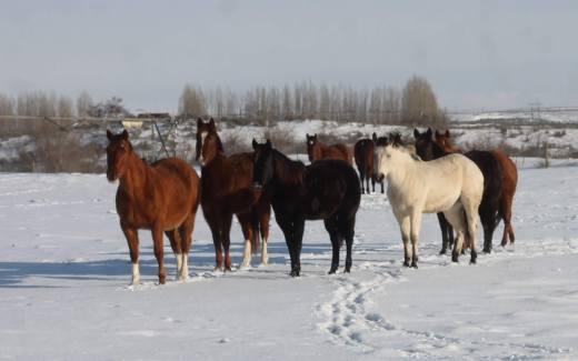 Horses Snow Feb 2019
