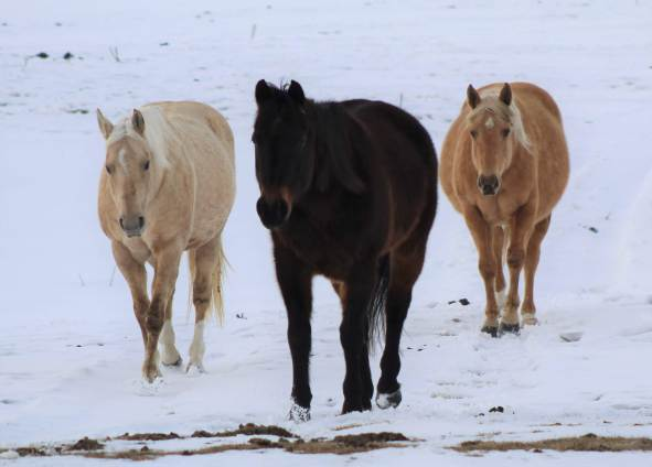 Abs, Goldie, and Lendy March 2019