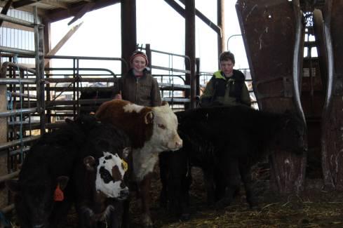 Anna and Kaine calves March 2019