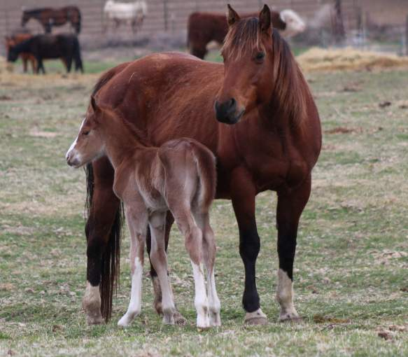 Twiggy and colt March 2019