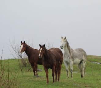Riding horses April 2019