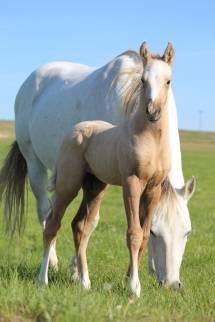 Rosie colt May 2019-4
