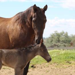 Blackie filly June 2019-1