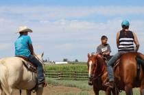 Group July 2019- Horse Clinic