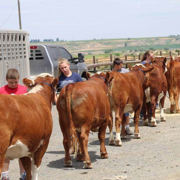 Hereford clinic July 2019-1