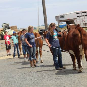 Hereford clinic July 2019-3
