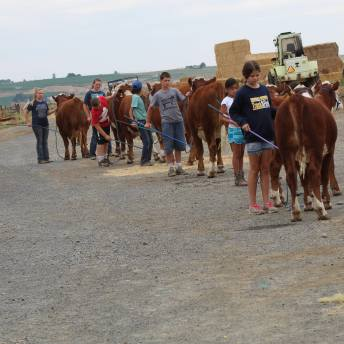 Hereford Clinic July 2019-6
