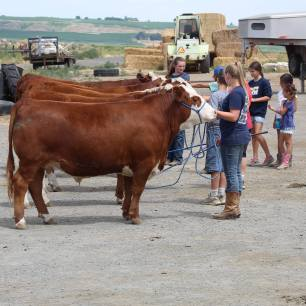 Hereford clinic July 2019