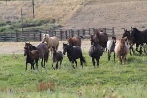 Weaning foals Sept 2019