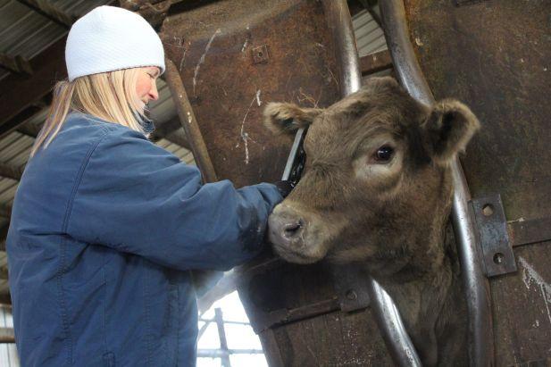 Jen bangs vaccinating Dec 2019