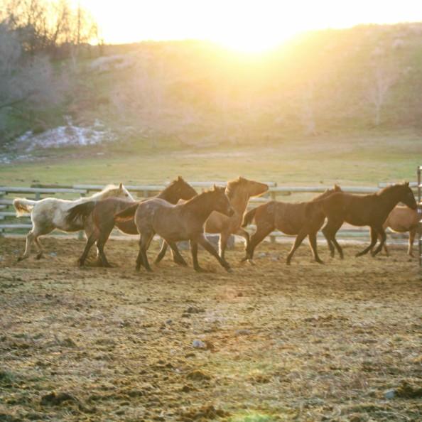 Foals Jan 2020- sunset