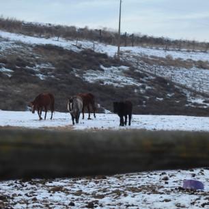 Old mares Jan 2020