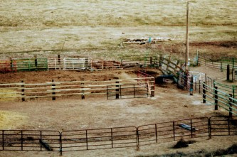 corral rebuild- Feb 2020-1
