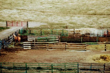 Corral rebuild- Feb 2020