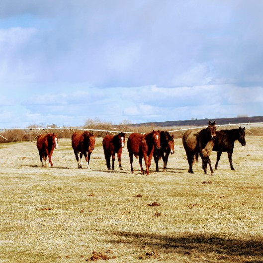 Young nosey horses Feb 2020-1