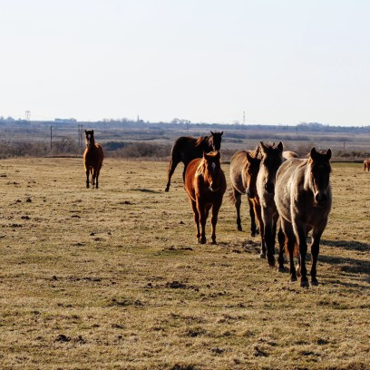 Young nosey horses Feb 2020
