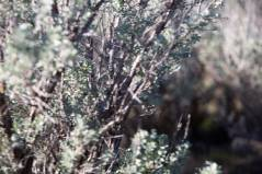 Anna Sagebrush Pic Mar2020
