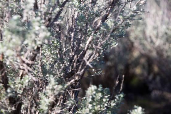 Anna Sagebrush Pic Mar2020
