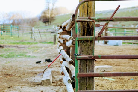 Fence March 2020