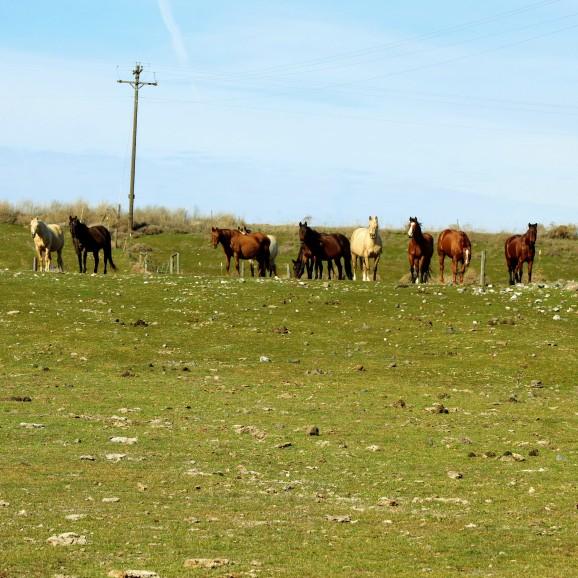 Horses in 5 Feb 2020
