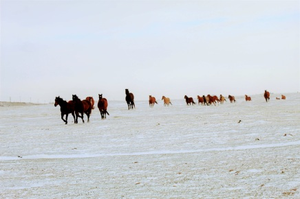 Mares in snow Circle 7 March 2020
