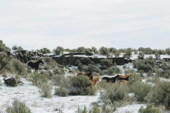 Mares in snow March 2020