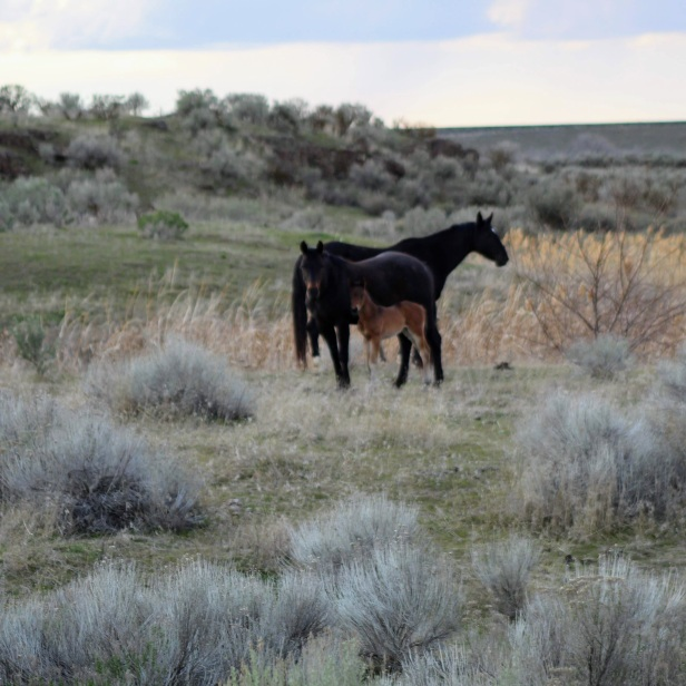 Mud and colt March 2020-1