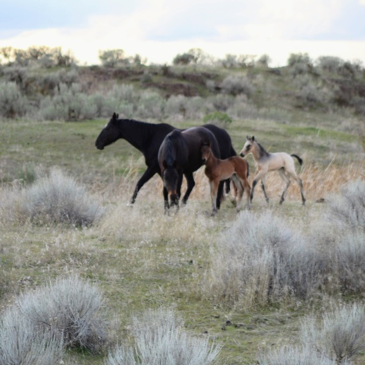 Mud and colt March 2020