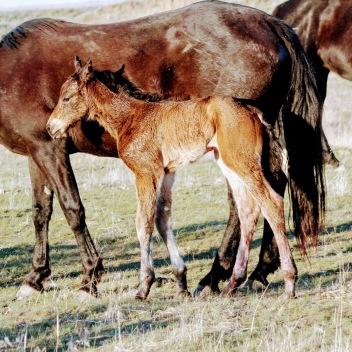 Mud foal March 2020-1