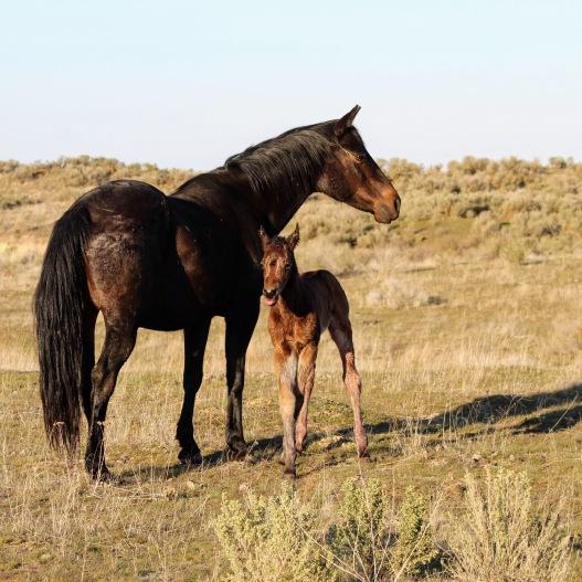 Mud foal March 2020-3