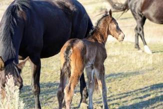 Mud foal March 2020
