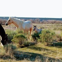 Shiney foal March 2020-1