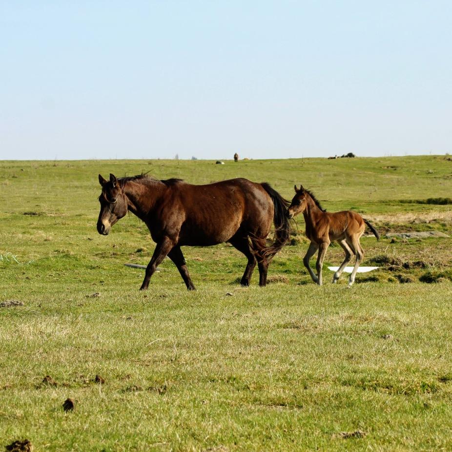 Bayley and colt April 2020-1