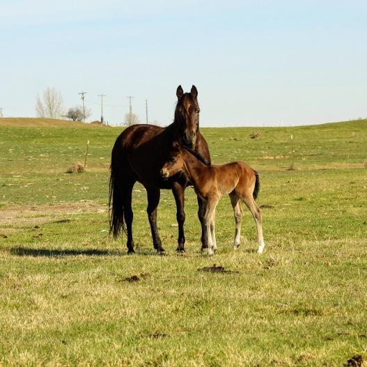 Bayley and colt April 2020