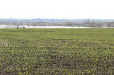 Circle 7 alfalfa field April 2020