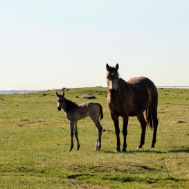Twist and filly April 2020-1