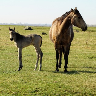 Twist and filly April 2020