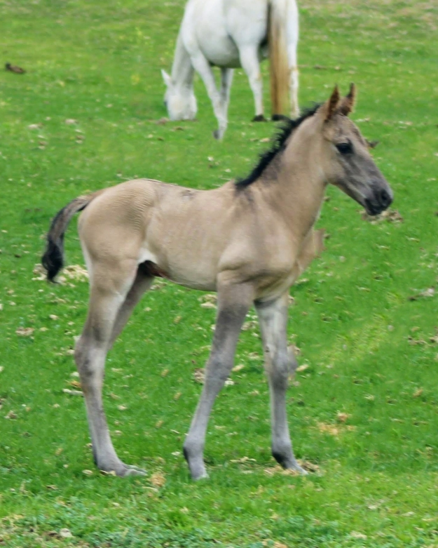 Dolly colt May 2020-1