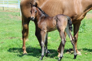 Sissy filly May 2020